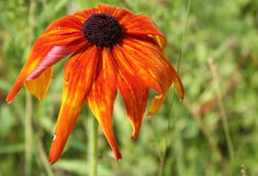 Pomarańczowy kwiat Fotografia Stock