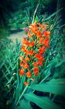 Pomarańczowy kwiat Zdjęcia Royalty Free