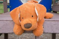 Pomarańczowy mokietu pies przy boiskiem Zdjęcie Royalty Free