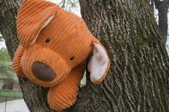 Pomarańczowy mokietu pies w drzewie Obrazy Stock
