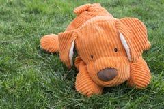 Pomarańczowy mokietu psa lying on the beach na trawie Zdjęcia Royalty Free