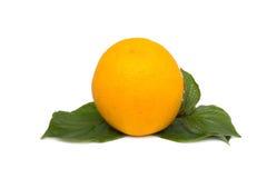 pomarańczowy white Fotografia Royalty Free