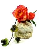 Pomarańcze róża na kamieniu Fotografia Royalty Free