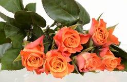 Pomarańczowe róże na bielu Fotografia Royalty Free