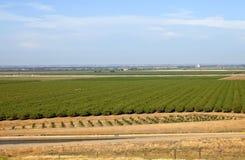 Pomares centrais de Califórnia. Imagem de Stock