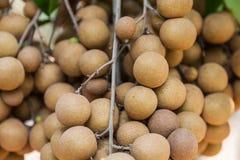 Pomares do Longan - longan dos frutos tropicais Imagens de Stock Royalty Free