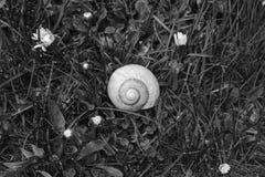 Pomatia för trumpetsnäckasnigelspiral i gräset Arkivbilder