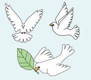 Pomba branca, ilustração branca dos pássaros dos pombos Imagens de Stock Royalty Free