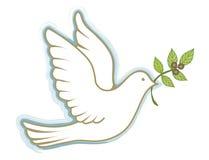 Pomba da paz Foto de Stock