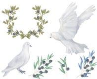 Pomba de tiragem digital da paz da mosca do pombo e do pássaro da aquarela do clipart verde-oliva para a ilustração da celebração ilustração stock