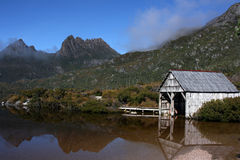 Pomba do lago Imagens de Stock