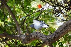 A pomba senta-se na coroa do ` s da árvore Um pássaro no parque Fotografia de Stock