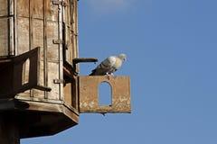 Pombal (casa do pombo) Foto de Stock Royalty Free