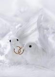 Pombas brancas Imagem de Stock