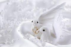 Pombas brancas Imagem de Stock Royalty Free