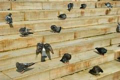 Pombas de Eminonu Foto de Stock