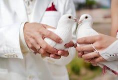 Pombas do casamento Foto de Stock