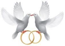 Pombas do casamento com anéis Fotografia de Stock Royalty Free