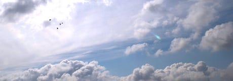 Pombas do vôo Imagens de Stock Royalty Free