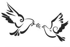 Pombas do vetor isoladas no branco A paz mergulhou com ramo de oliveira Eps 10 Fotografia de Stock