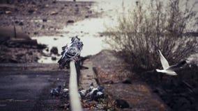 Pombas e gaivota de voo em uns trilhos no leito fluvial do Reno do rio em Bona foto de stock royalty free