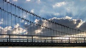 Pombas e ponte de suspensão fotografia de stock royalty free
