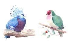 Pombas exóticas ajustadas da aquarela que sentam-se no ramo Fotos de Stock Royalty Free
