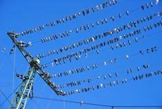 Pombas nos fios elétricos imagens de stock royalty free