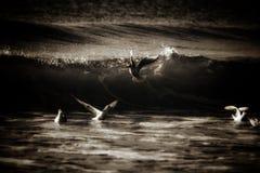 Pombas que jogam ao redor no oceano imagem de stock