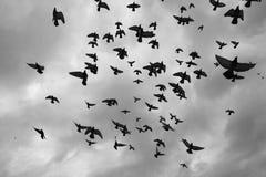Pombas que voam no céu imagens de stock royalty free
