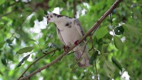Pombo branco que senta-se no ramo de árvore vídeos de arquivo