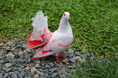 Pombo cor-de-rosa branco que senta-se na grama verde fotografia de stock royalty free