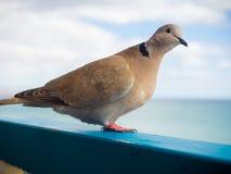Pombo curioso pelo mar imagens de stock