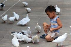 Pombo do branco da alimentação da criança Imagem de Stock