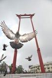 Pombo do vôo de Chingcha Wat Suthat do Sao Foto de Stock