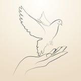 Pombo do voo da paz do esboço aberto das mãos em linhas pretas Fotografia de Stock Royalty Free