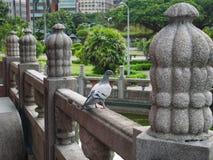Pombo em trilhos concretos da ponte imagem de stock royalty free