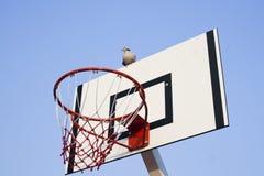 Pombo em uma aro de basquetebol Fotos de Stock Royalty Free