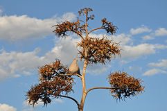 Pombo na árvore Imagens de Stock Royalty Free