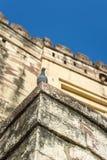 Pombo na parede da fortaleza de Mehrangarh em Jodhpur, India foto de stock royalty free