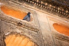 Pombo nas paredes do túmulo imagem de stock royalty free