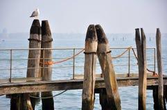 Pombo no seashore em Veneza, Italy imagens de stock