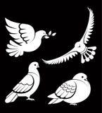 o símbolo do pássaro da pomba da mão nas mãos vector o molde do