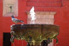 Pombo que empoleira-se na borda de uma fonte velha bonita em Santa Catalina Monastery em Arequipa imagem de stock royalty free