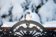 Pombo que senta-se em um ornamento do pássaro do metal Imagens de Stock Royalty Free