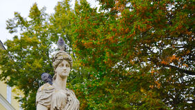 Pombo que senta-se no monumento velho da história e que olha para fora aos povos Fotografia de Stock