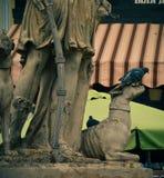 Pombo que senta-se no monumento velho da história e que olha para fora aos povos Fotos de Stock