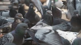 pombos vídeos de arquivo