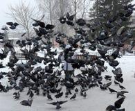 Pombos da alimentação de inverno da mulher Fotografia de Stock