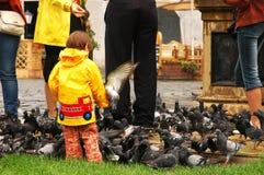 Pombos de alimentação da menina Imagem de Stock